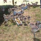 Criaderos de ñandú y turismo rural