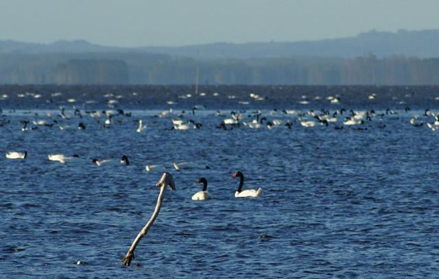Ecoturismo en Rocha: Laguna de Rocha