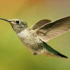 El avistamiento de aves en Uruguay
