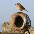Sitios de avistamiento de aves en Uruguay