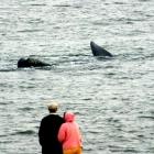 El avistamiento de ballenas en Uruguay