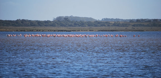 Avistamiento de aves en la Laguna de Rocha