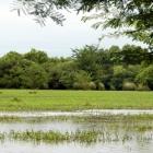 Parque Esteros de Farrapos e Islas sobre el Río Uruguay