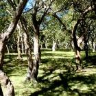 Parque Indígena