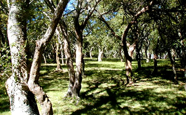 Parque Indígena de Punta del Este