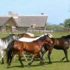 Turismo rural en el Uruguay natural