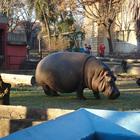 Zoológico Municipal de Villa Dolores